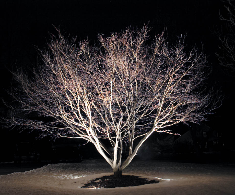 uplighting a winter tree